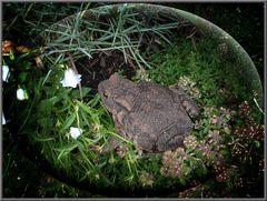 Ein treuer Gast in unserm Garten