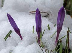 Ein Trio im Schnee zu Ostern