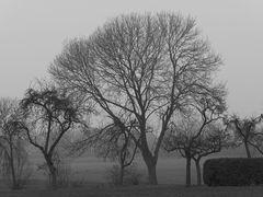 Ein trüber November-Nachmittag im südlichen Münsterland bei Ahlen