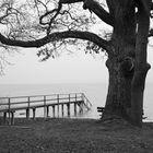 Ein trüber Wintertag am See