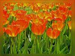 Ein Tulpenfeld