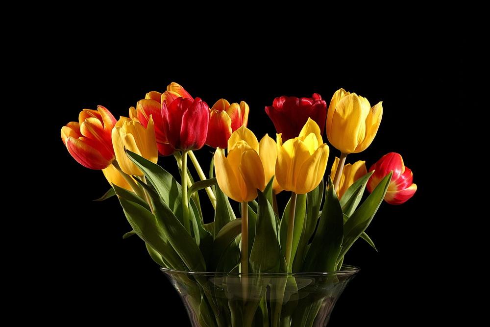 Ein Tulpenstrauß I