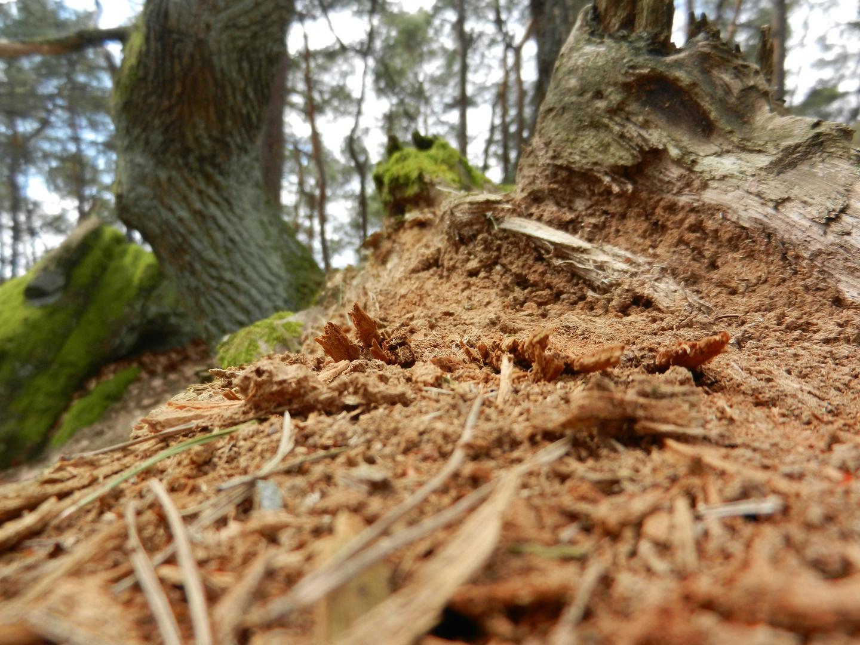 Ein umgefallener Baum