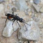Ein unbekanntes Insekt