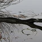"""Ein """"Ungeheuer"""" am Ufer vom Kleinen Plöner See"""