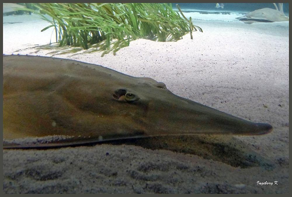 ein ungewöhnlicher Fisch