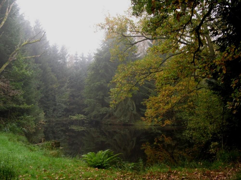 Ein versteckter Waldteich in der Heide am frühen Morgen