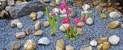 Ein Versuch mit drei Sumpfpflanzen in einem Sumpfbeet der besonderen Art...