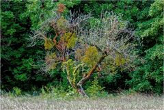 Ein verwunschener Baum