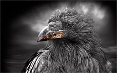 ein Vogel