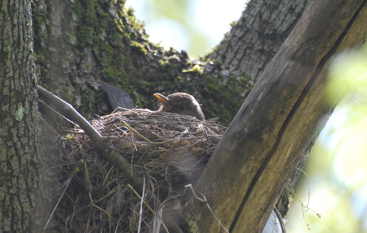 Ein Vogel im Nest