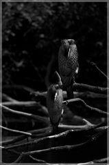 Ein Vogel kommt selten allein