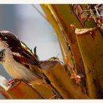 Ein Vogellied....