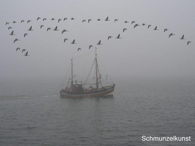 Ein Vogelschwarm wie Wangerooge