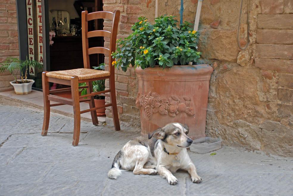 Ein Wachhund irgendwo in der Toscana