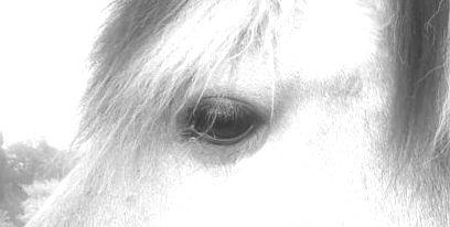 ~Ein wachsames Auge~