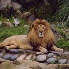 Ein wahrer König