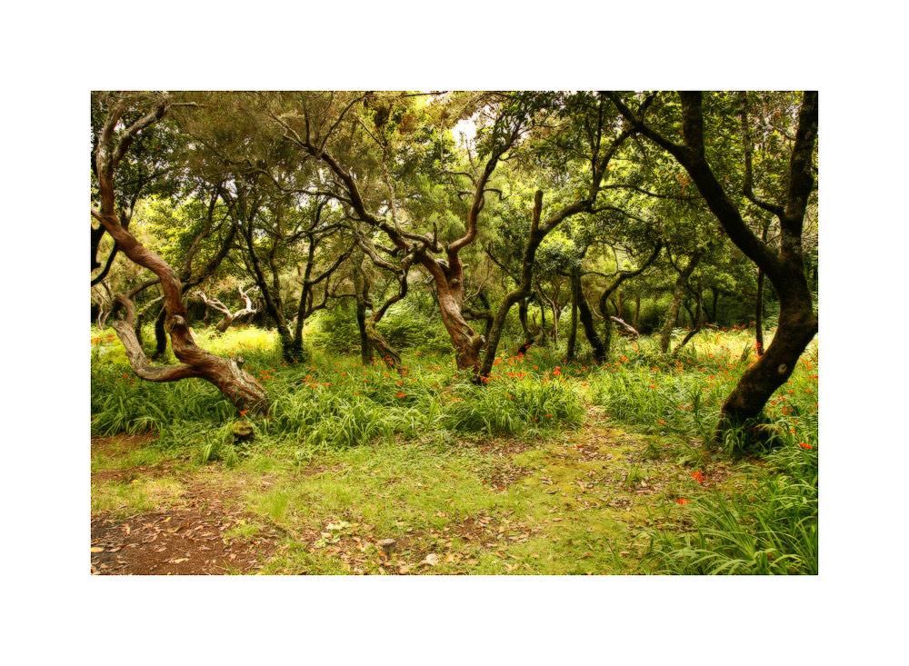 Ein Wald und viele Montbretien