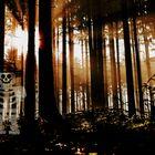 Ein Waldgeist? | spooky