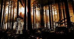 Ein Waldgeist?   spooky