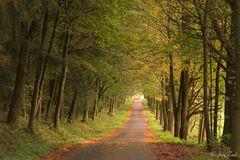 Ein Waldweg und ein Abschied von der FC...