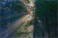 Ein Waldwunder