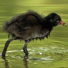 Ein Wasservogel