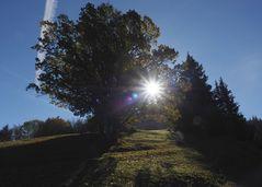 Ein Weg durchs Sonnenlicht
