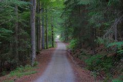 Ein Wegerl im Böhmerwald