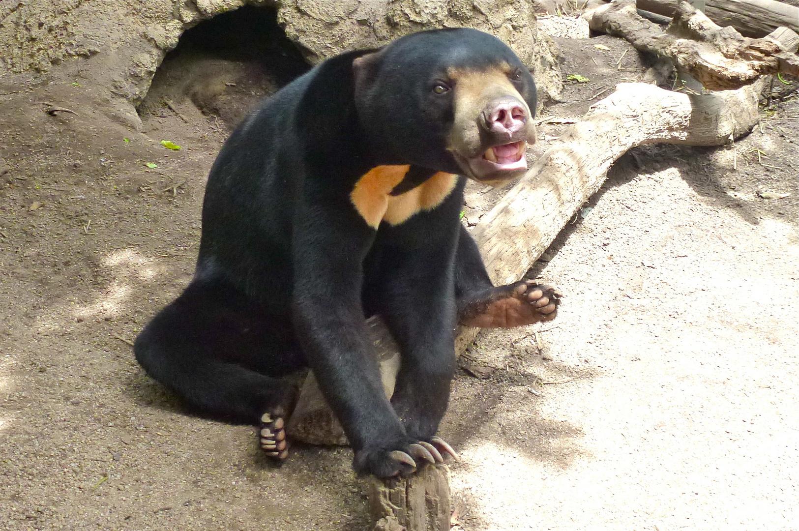 Ein weiterer geretteter Bär!!