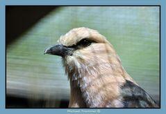 ein weiterer Vogel