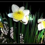 Ein wenig durchnässt ... Liebe Ostergrüße an alle!