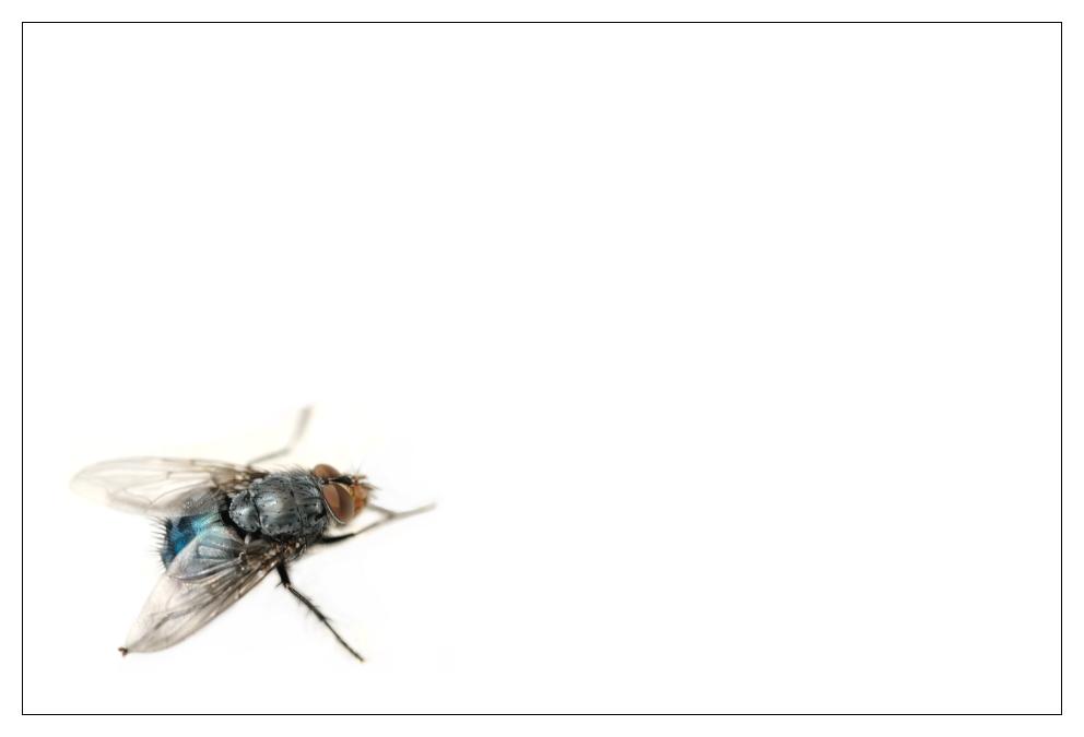 Ein wenig Fliege I
