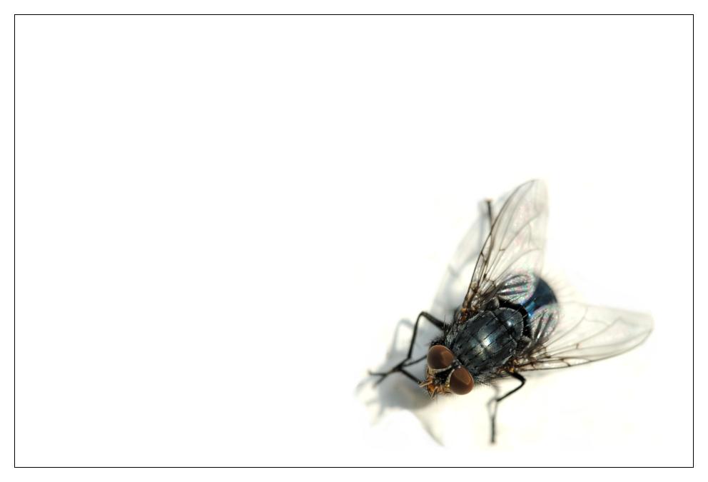 Ein wenig Fliege II