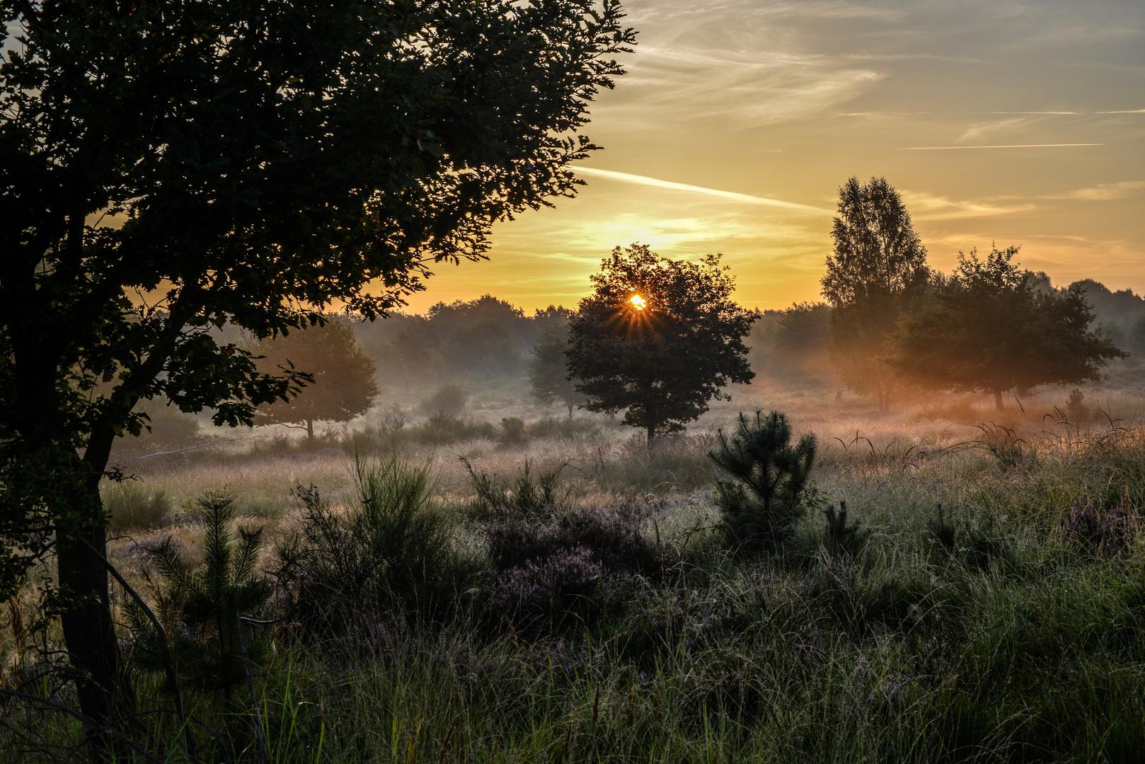 Ein wenig Morgenlicht
