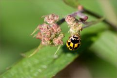 ein wilder Käfer