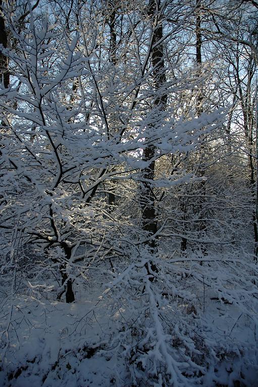 Winterliche Weihnachtsbilder.Ein Winterlicher Gruß Aus Dem Kölner Königsforst 3 Foto Bild