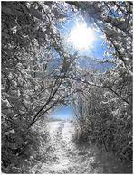 ein winterlicher spaziergang