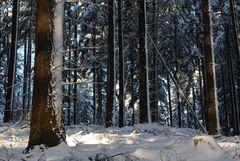 Ein Wintertag im Wald