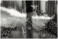 Ein Wintertag im Zoo - 2