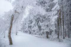 Ein Winterweg