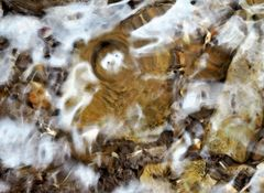Ein winziger Bachbewohner geniesst das kostbare Nass! - Un mini-monde dans le ruisseau de montagne!