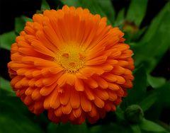 Ein Wochenendblümchen