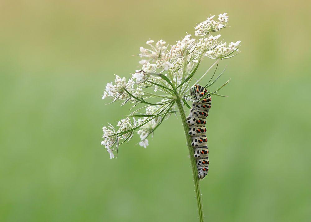 Ein Würmchen