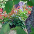 °°° Ein wunderbares Herbstmotiv im Zabeltitzer Barockgarten °°°