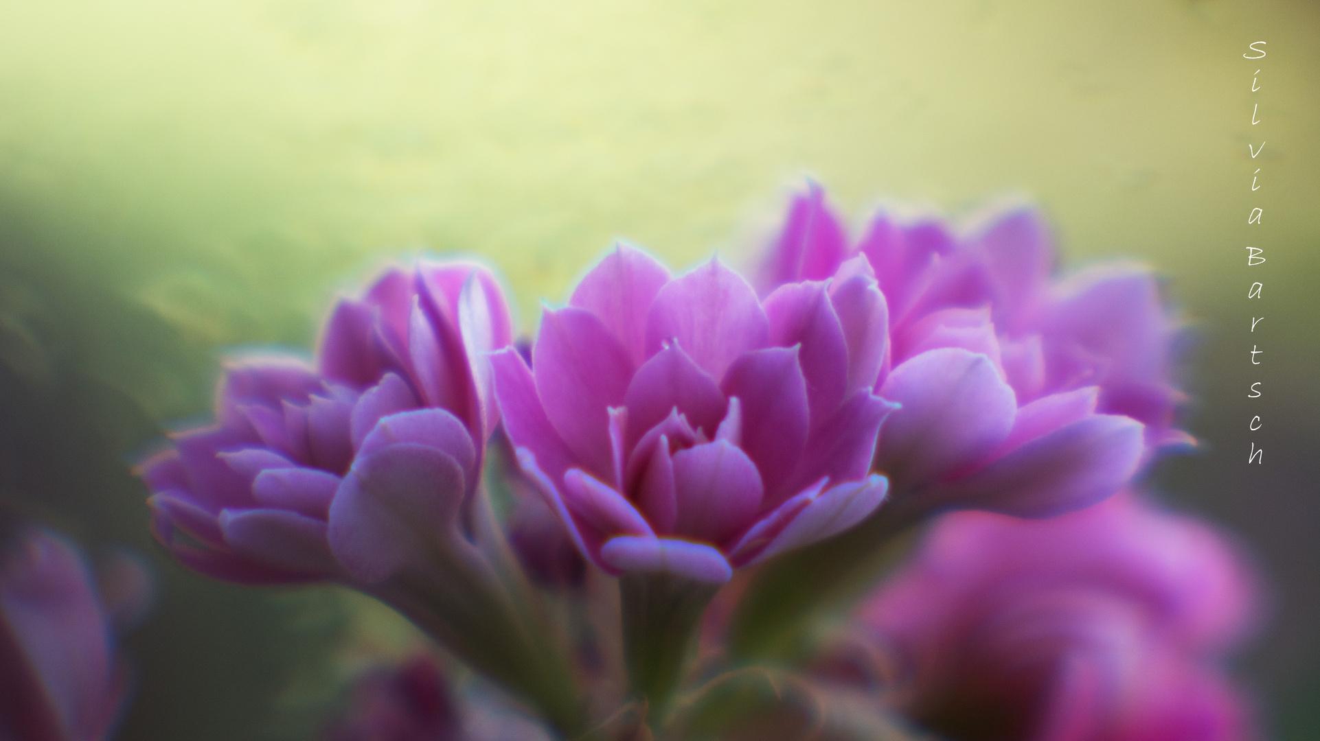 Ein zarter Blütenkuss