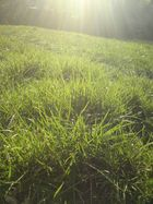 ein zartes grün