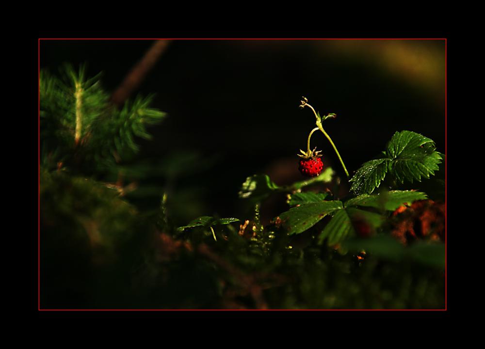 Ein zartes Leuchten