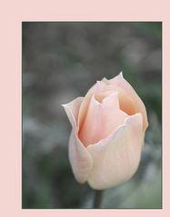 Ein zartes Rosé.