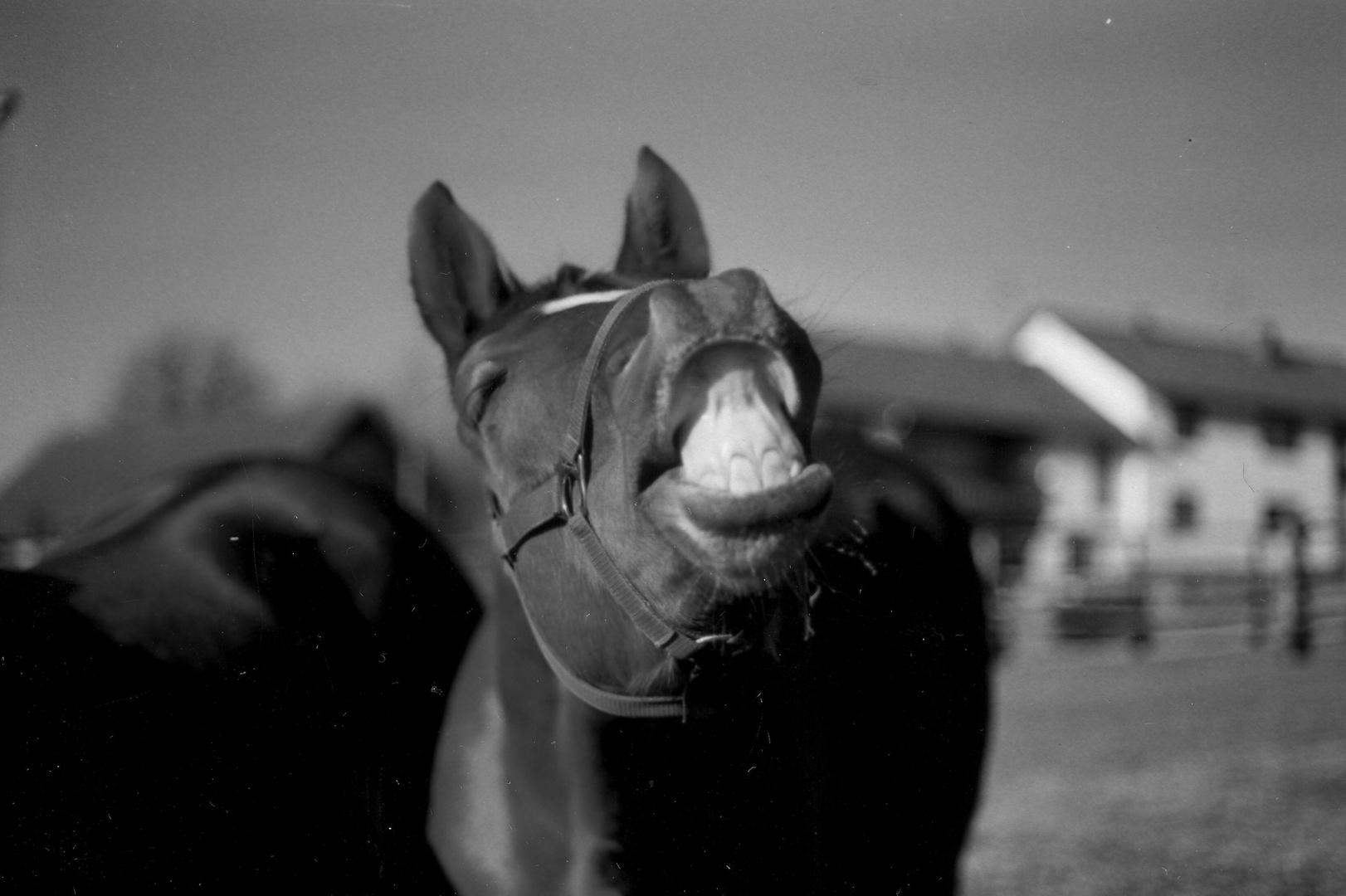 Ein zauberhaftes Lächeln..